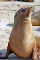 sea lion posing at the beach in Galapagos