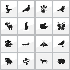 Set Of 16 Editable Nature Icons. Includes Symbols Such As Kangaroo, Catbird, Groundhog And More. Can Be Used For Web, Mobile, UI And Infographic Design.