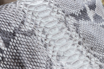 Reptile snake texture closeup, fashion zigzag snakeskin python picture.