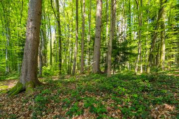 Waldweg im Frühling in Deutschland, Europa