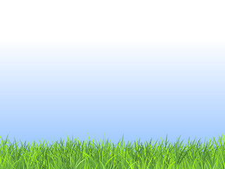Summer field with fresh green grass and blue sky. Natural vector background