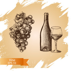 Vector illustration sketch - wine and grape