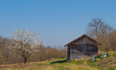 Devastation in village. Rural spring landscape. Old empty wooden house.
