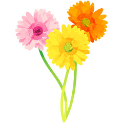 gerbera - birth flower vector illustration in watercolor paint textures