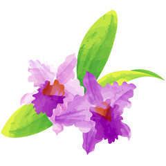 cattleya - birth flower vector illustration in watercolor paint textures