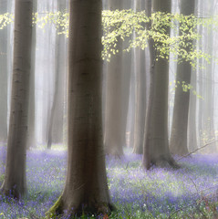Garden Poster Forest Spring forest abstract wildflowers and first green