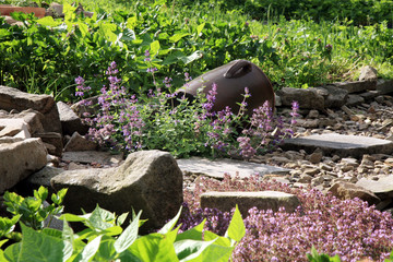 Country home garden by rustic style. Spring herbs and vegetable.