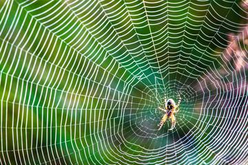 Dew on spider web