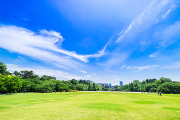 新緑が眩しい休日の公園