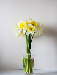 Charming daffodils in a glass