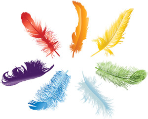 seven rainbow color feathers isolated on white