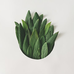Creative minimal arrangement of green leaves. Nature concept. Flat lay.