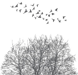 Silhouette of flying birds and tree vector illustration
