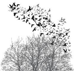 Silhouette flying birds vector
