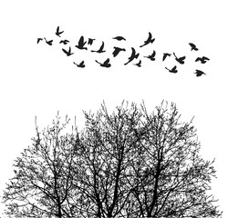 Silhouette flying birds and silhouette tree vector illustration