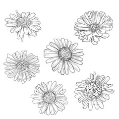 Daisy hand drawn sketches set.