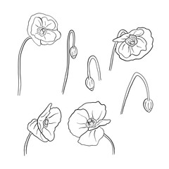 Linear art hand drawn poppy flowers set.