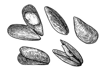 Mussels illustration, drawing, engraving, ink, line art, vector