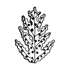 an Alga drawing