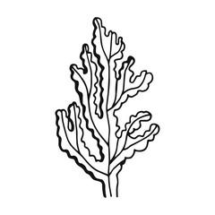An Alga hand-drawing