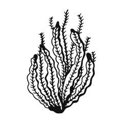 An Alga vector isolated
