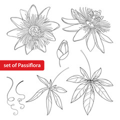 Vector set with outline tropical Passiflora or Passion flower. Exotic flowers, bud, leaf and tendril isolated on white background. Floral elements in contour style for summer design and coloring book.