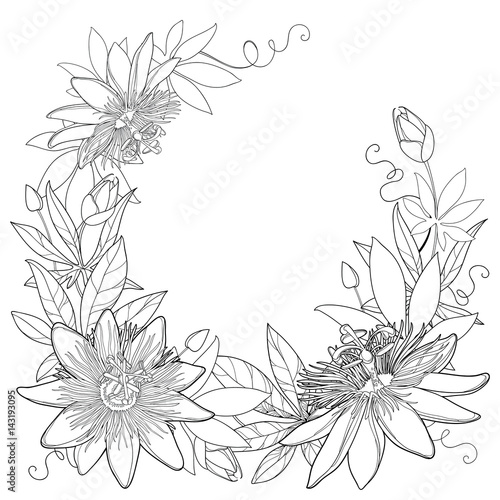 Passion Flower Line Drawing : Quot vector wreath with outline tropical passiflora or passion