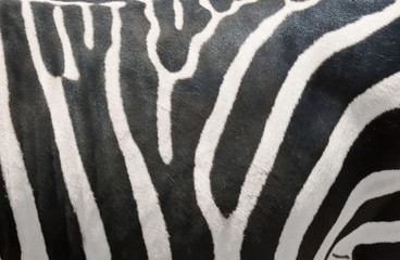 Zebras Stripes