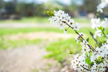 Blütenpracht als Hintergrung