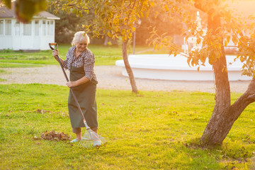 Elderly woman working with rake. Lady in sunny garden.