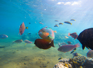 Underwater seaview with tropical fish school. Young coral formation and coral fish shoal.