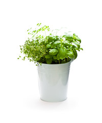 Home  grown herbs in metal bucket isolated on white background