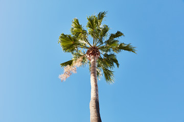 Single palm tree under blue sky
