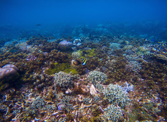 Underwater landscape of coral sea bottom. Tropical seashore underwater photo.
