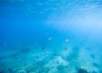 Blue shallow waters with white sand seabottom. Tropical seashore undersea photo.