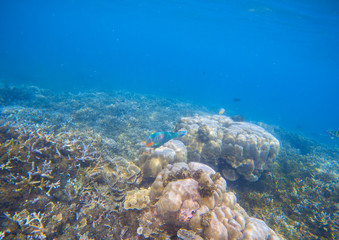 Coral reef landscape. Coral fish in corals. Tropical seashore underwater photo.
