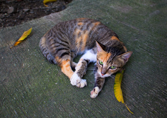Wild homeless cat with yellow leaves. Abandoned domestic animal. Adopt cat concept photo.
