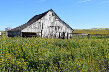 Antique White Barn