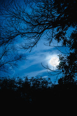 Silhouettes of dry tree against sky and beautiful super moon. Outdoor.