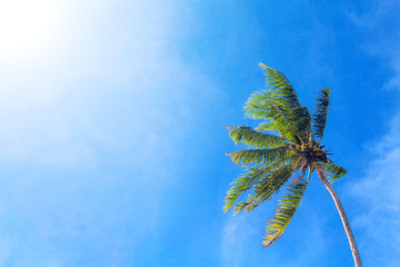 Coco palm tree on cloudy blue sky background. Sunny day on tropical island.