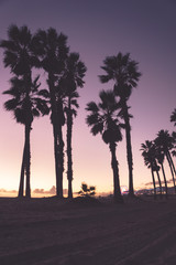 Palm trees in a purple sunset