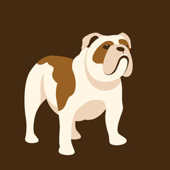 Bulldog vector illustration style Flat