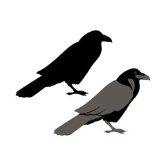 Raven vector illustration style Flat set silhouette