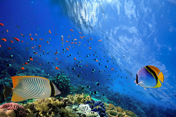 Underwater scene, showing different colorful fishes swimming