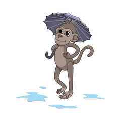 Monkey in the rain