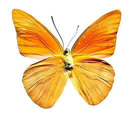 Top View of Spread Butterfly