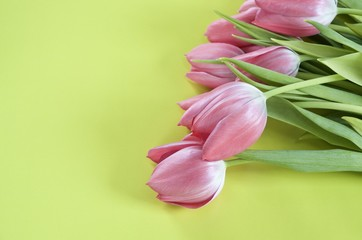 Pink tulips and yellow green background