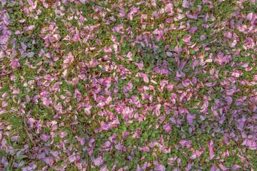 Rasenfläche mit Blüten