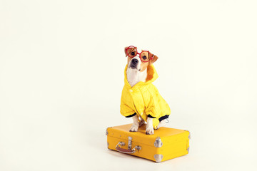 Well-dressed dog is sitting on suitcase