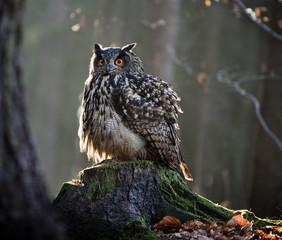 Eurasian Eagle Owl (Bubo Bubo) sitting on the stump.